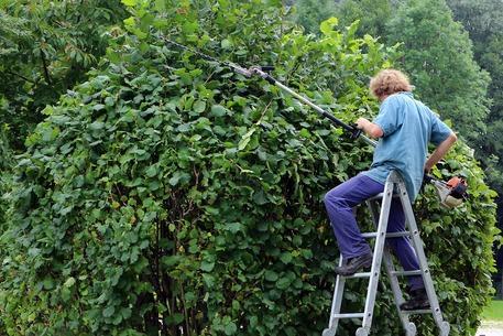lavoro giardiniere liguria