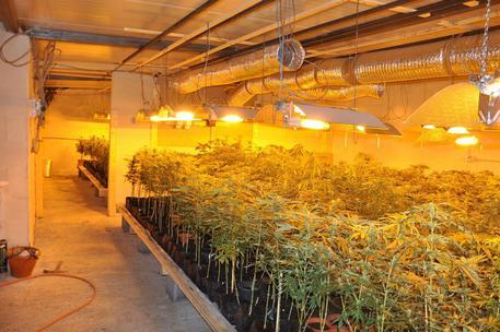 Catania, maxi-piantagione di marijuana