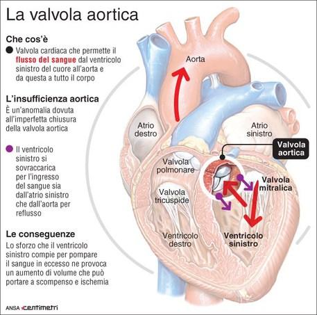 La valvola aortica
