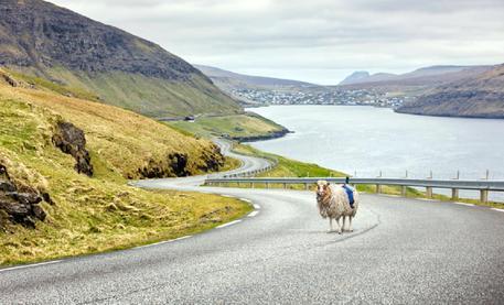 Pecore View 360: la rivincita delle isole Faroe contro Google street view