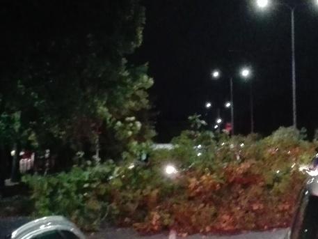 Maltempo a milano fulmine a parco sempione uccide un cane - Bastioni di porta venezia ...
