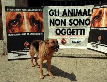 LAV launches campaign agst botox testing on animals - English - ANSA it