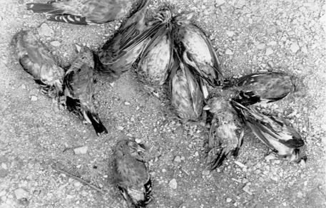 Seveso: 40 anni fa la tragedia della nube alla diossina