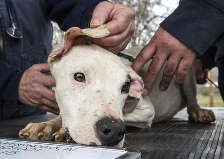 Catania, bimbo morto e madre grave: sbranati dai loro cani