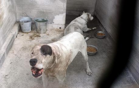 Bimbo sbranato cani,gup:18 mesi a madre