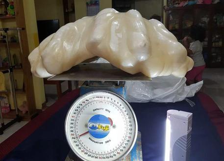 34 chili, 100 milioni di dollari: la maxi perla pescata nelle Filippine