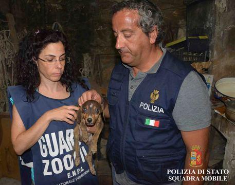 Cani denutriti e maltrattati a Vallinfreda, denunciato 51 enne