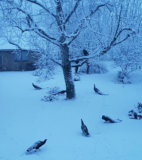 Neve, intervento esercito nel Maceratese