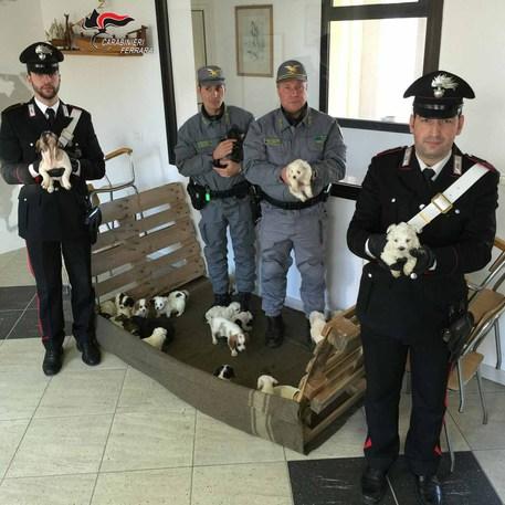 Cuccioli Sequestrati Saranno Adottati Emilia Romagna Ansait