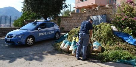 Sequestro piantagione e 100 kg di 'erba'