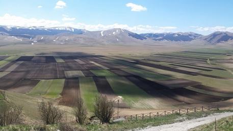 Pasquetta semina a Castelluccio Norcia