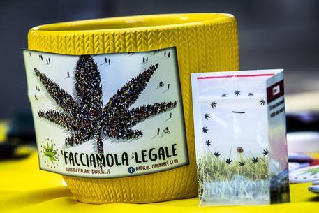 Cannabis: in piazza Montecitorio corso autocoltivazione dei Radicali