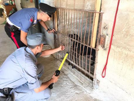 Canile abusivo sequestrato a Palermo: una persona denunciata