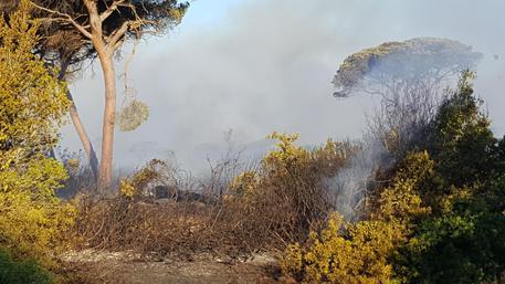 Incendio nel Viterbese: