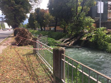 In arrivo piogge e temporali su tutto il Friuli