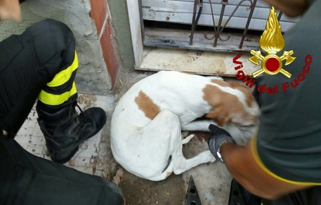 Quartu, cane incastrato nella ringhiera: intervengono i vigili del fuoco