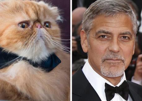 Yoda e Clooney © ANSA