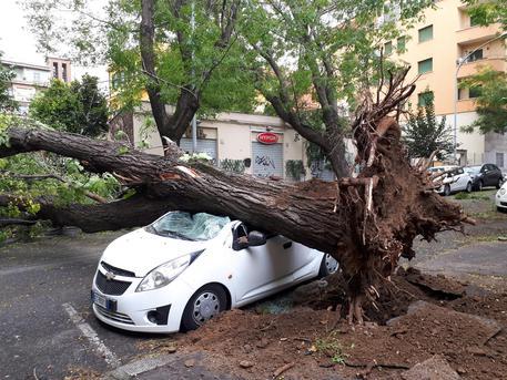 Caduti alberi sulla Pa-Ct, due i feriti$