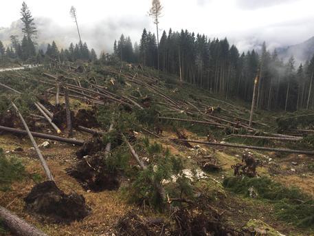 stato Trentino Trento e emergenza chiedono AAS Bolzano ANSA it xwwfqAR