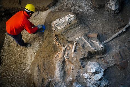 Pompei, un'immagine dall'alto dello scheletro del sauro. Si notano le zampe contratte dell'animale. FOTO Cesare Abbate ANSA © ANSA