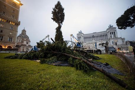 È arrivato 'Speraggio', l'albero del Natale 2018 a Roma
