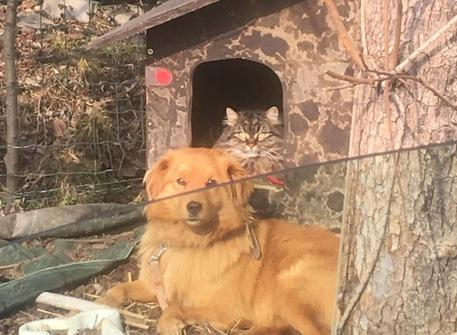In veneto ok sepoltura cani in giardino veneto for Giardino e cani
