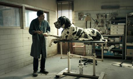 E' 'Dogman' il film italiano candidato all'Oscar