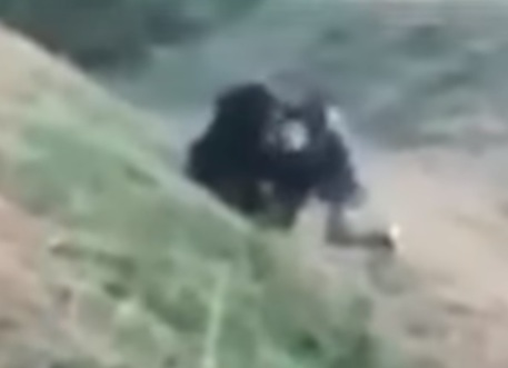 Fà un selfie con l'orso e trova la morte