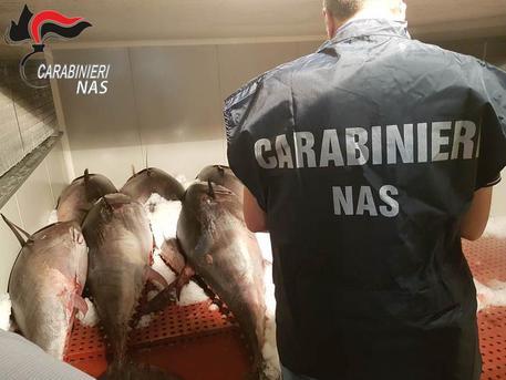 Catania, sequestrate 2,2 tonnellate di tonno rosso$