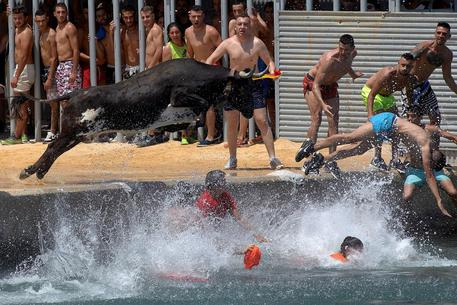 Bous a la Mar Fiesta in Denia © EPA