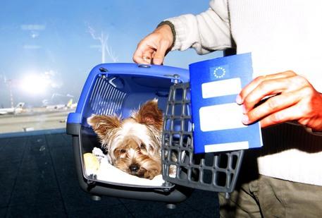 Cane chiuso in casa da giorni, salvato
