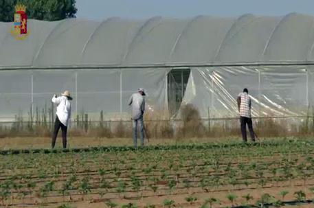 Un fermo immagine (di archivio) di un video di un'operazione contro il caporalato a Terracina (Latina) © ANSA