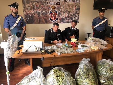 Scoperta serra di marijuana a Settimo