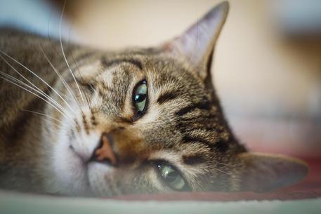 Giornata internazionale del gatto