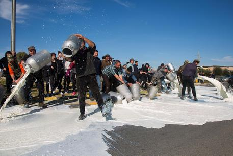 Protestano pastori sardi per il prezzo del latte, bloccata squadra del Cagliari