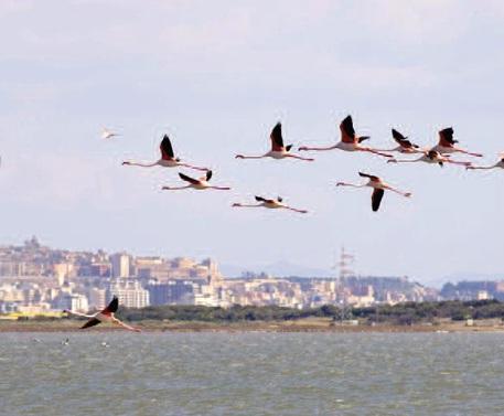 Caos voli condiziona turisti a Pasqua