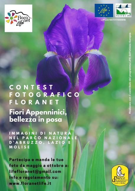 Transiberiana Dabruzzo Calendario 2020.Contest Fotografico Per Fiori Pnalm Notizie Molise Ansa It