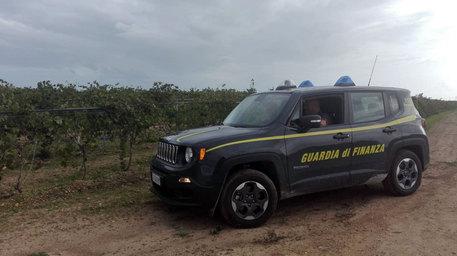 Trapani, 36 denunce per frodi su fondi agricoli$