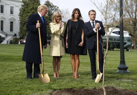 Morta quercia dell'amicizia Trump-Macron - Nord America