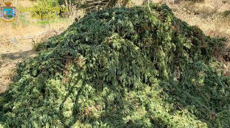 Gdf sequestra 9 tonnellate di Cannabis$