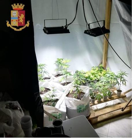 Serra marijuana in casa scoperta con App