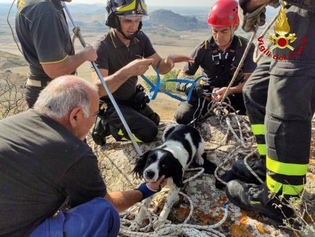 Cane in burrone, salvato dai pompieri