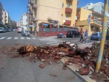 Palma crolla sulla strada a Cagliari