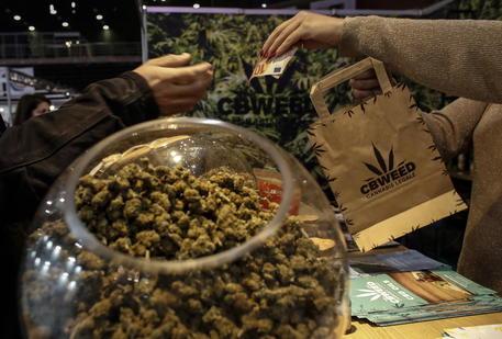Cannabis terapeutica, farmaco gratis in Sicilia - Agenzia ANSA