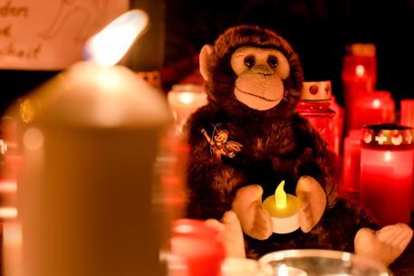 Strage scimmie, uccise da lanterne cinesi