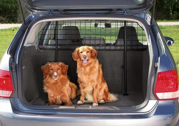 Viaggi in auto con gli amici a 4 zampe, cosa si deve sapere © Ansa