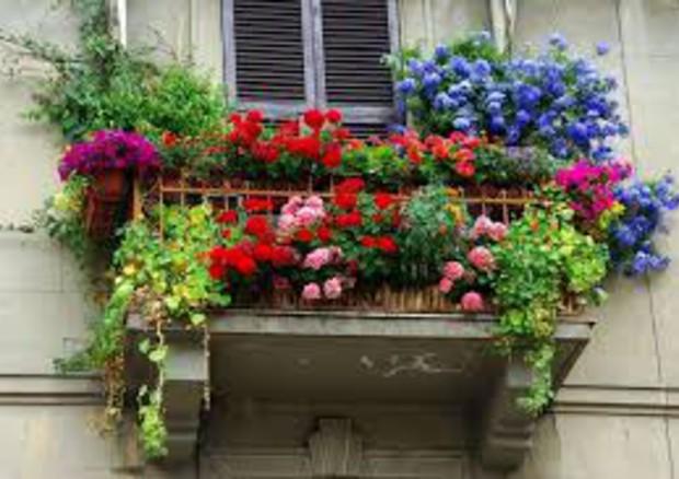 Euroflora 2018 - Concorso balconi fioriti - Press Release - Liguria ...