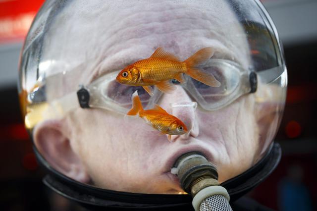 Un uomo indossa un acquario con due pesci rossi for Pesci rossi acquario
