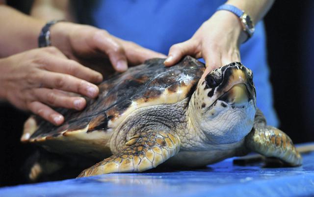 Visita di controllo per tartaruga acquario di melbourne for Tartaruga da acquario