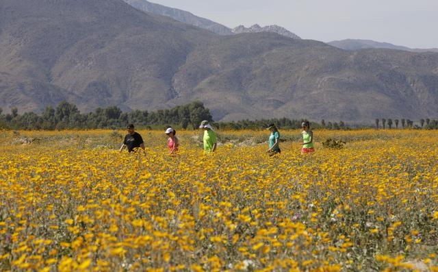 Superfioritura nel deserto nel sud della california for Cabine romantiche nel sud della california